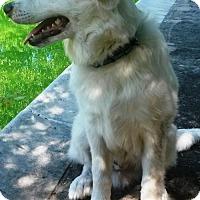Adopt A Pet :: CROSBY-I'm so smart it will scare you. - DeLand, FL