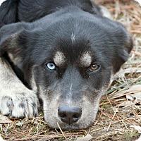 Adopt A Pet :: Samoa~adopted! - Glastonbury, CT