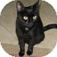 Adopt A Pet :: Mia - Vancouver, BC