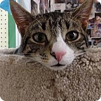 Adopt A Pet :: Casey - Island Park, NY
