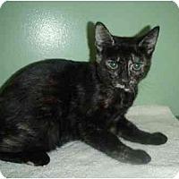 Adopt A Pet :: Kinsey - New Egypt, NJ
