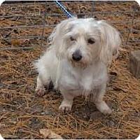 Adopt A Pet :: Jake - Clayton, OH