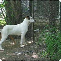 Adopt A Pet :: Partner - Antioch, IL