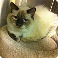 Adopt A Pet :: Porker - Pittstown, NJ