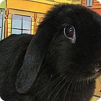 Adopt A Pet :: Snuggles - Foster, RI