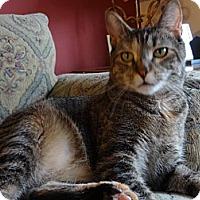 Adopt A Pet :: Sonia - Colmar, PA