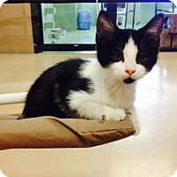 Adopt A Pet :: Smudge - Gadsden, AL