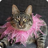 Adopt A Pet :: Vida - Addison, IL
