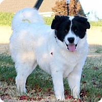 Adopt A Pet :: Oakley - Oliver Springs, TN