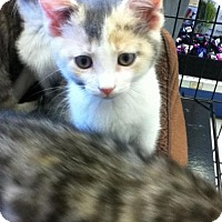 Adopt A Pet :: Kayley - Caistor Centre, ON