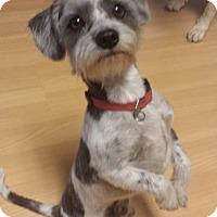 Adopt A Pet :: Lou - Windermere, FL