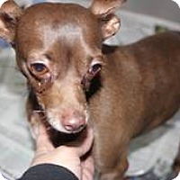 Adopt A Pet :: Miss Molly - Wallingford Area, CT