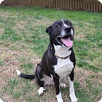 Adopt A Pet :: Grace - Manhasset, NY