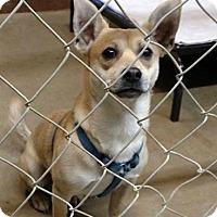 Adopt A Pet :: Radar - Albany, NY