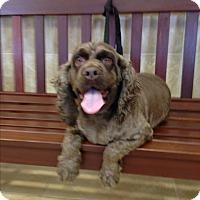 Adopt A Pet :: Kaydee -Adopted! - Kannapolis, NC