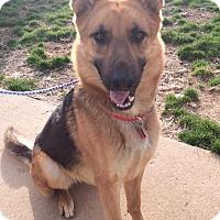 Adopt A Pet :: Benjamin - Greeneville, TN