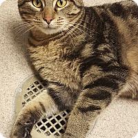 Adopt A Pet :: JONATHAN - Tiffin, OH