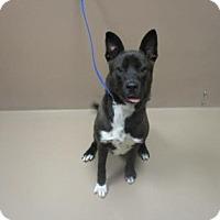 Adopt A Pet :: BEANS - Reno, NV