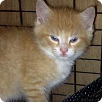 Adopt A Pet :: Rita - Franklin, WV