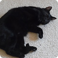Adopt A Pet :: Sanders(so gentle) - Roseville, MN