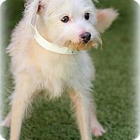 Adopt A Pet :: Baxter - Ft. Lauderdale, FL