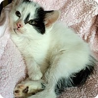 Adopt A Pet :: Dakota - Island Park, NY