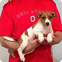 Adopt A Pet :: Jake - South Euclid, OH