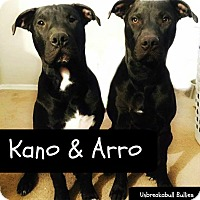 American Pit Bull Terrier Mix Dog for adoption in Des Moines, Iowa - Arro