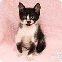 Adopt A Pet :: CANARY - Irvine, CA