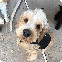 Adopt A Pet :: Walter - Van Nuys, CA
