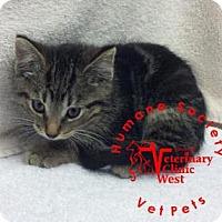 Adopt A Pet :: Crumpet - Janesville, WI