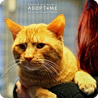 Adopt A Pet :: Tom - Edwardsville, IL