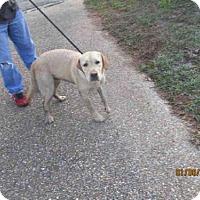 Adopt A Pet :: JUNIOR - Panama City, FL