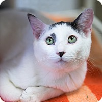 Adopt A Pet :: Zeus - Montclair, CA
