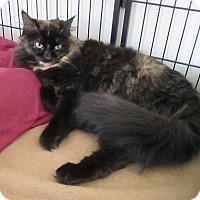 Adopt A Pet :: May - Glenwood, MN
