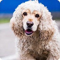 Adopt A Pet :: Hamilton - San Diego, CA