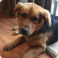 Adopt A Pet :: Cam - joliet, IL