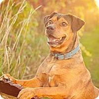 Adopt A Pet :: Sammy - Marion, WI