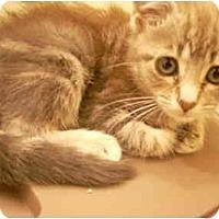 Adopt A Pet :: Paisley - Bartlett, TN