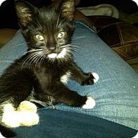 Adopt A Pet :: Roxi - Sterling Hgts, MI