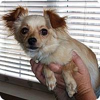 Adopt A Pet :: Emily - Vista, CA