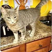 Adopt A Pet :: Tigress - Mobile, AL