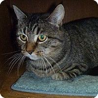 Adopt A Pet :: Taylor - Hamburg, NY