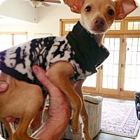 Adopt A Pet :: Baxter - Wimberley, TX