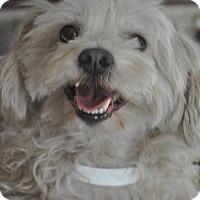 Adopt A Pet :: Michael - Phoenix, AZ