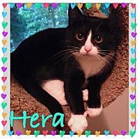 Adopt A Pet :: Hera - Newnan, GA