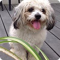 Adopt A Pet :: Honda - Mount Gretna, PA