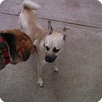 Adopt A Pet :: Dozer - Mount Carroll, IL