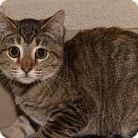 Adopt A Pet :: Hannah - Medina, OH