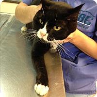 Adopt A Pet :: Paul - East McKeesport, PA
